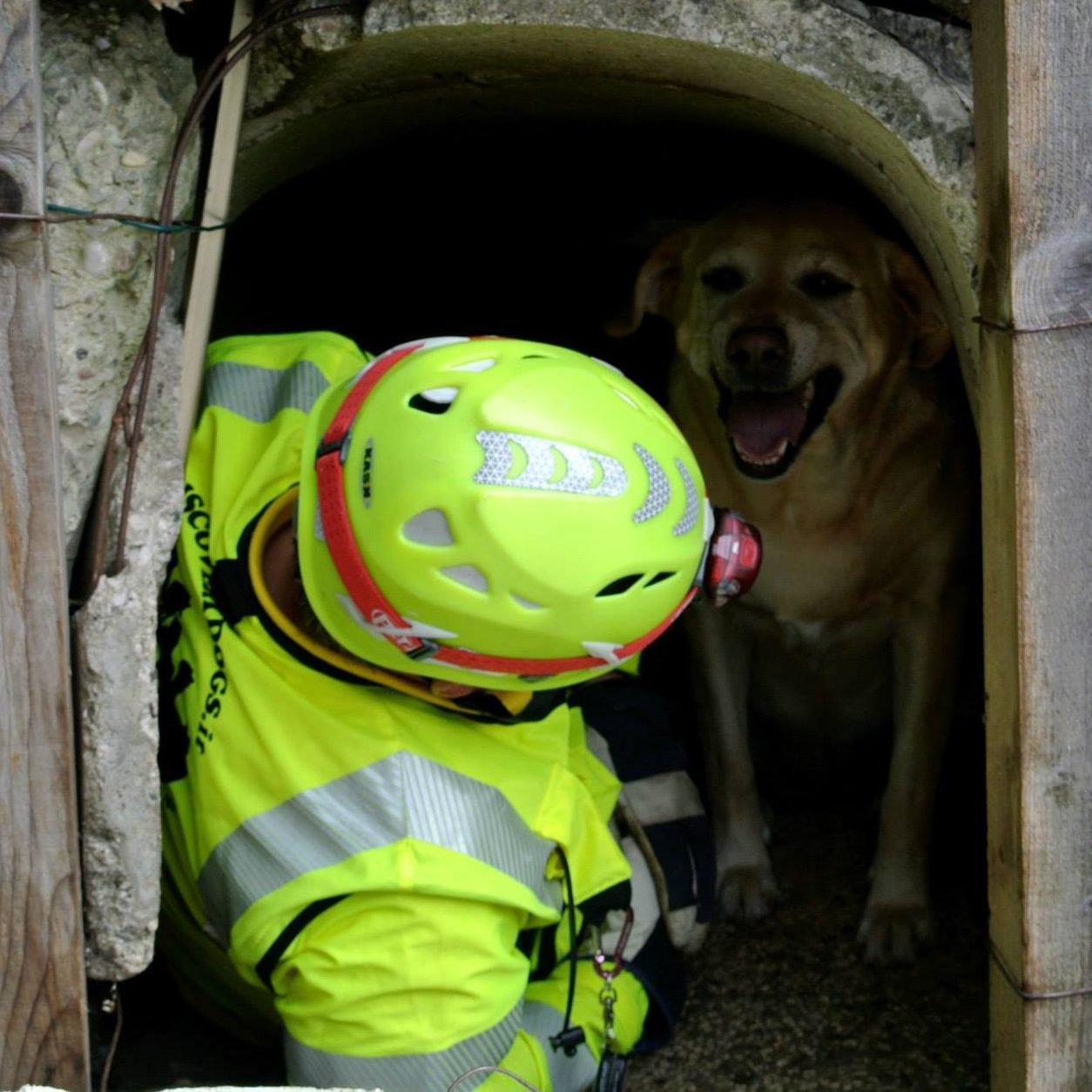 Search&Rescue Dogs and Civil Protection