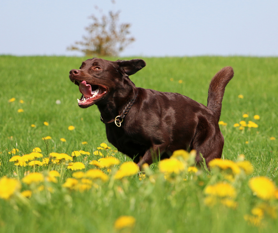 Programme approach for future SAR dogs - Introduction