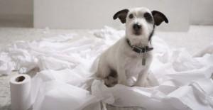 consulenze comportamento cane